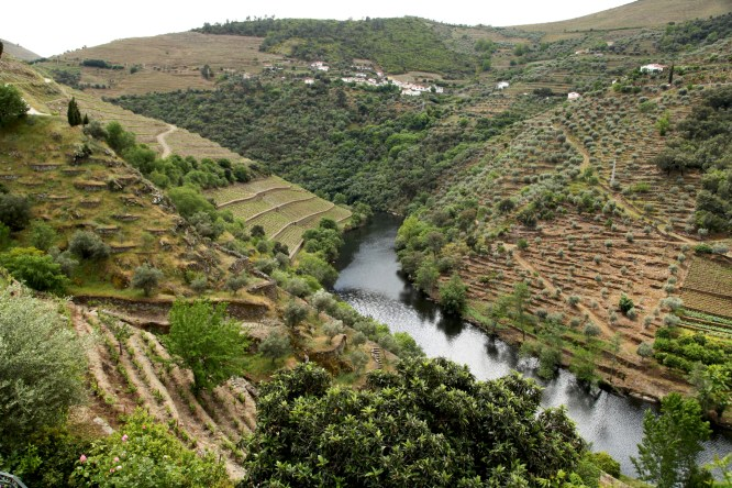 Quinta do Panascal, the flagship vineyard owned by the big producer, Fonseca. Nestled right along the mellow Tàvora River before it feeds into the Douro, they say the best grapes in Portugal come from this little valley right here.
