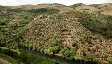 Quinta do Panascal vineyard views