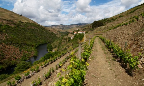 Quinta do Panascal vineyards