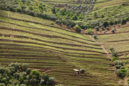 Douro Valley vineyards from river
