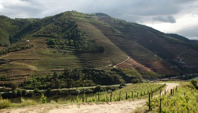 Douro Valley vineyard road