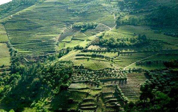 Douro Valley terraced hills
