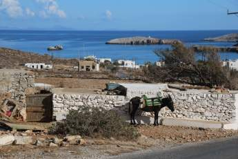Karavostasi Folegandros donkey