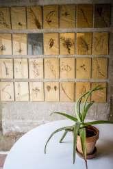 camellas-lloret seed prints