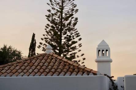 Casa Arte pine trees