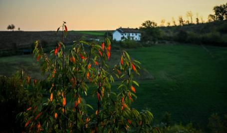 Casa Gialla bush at sunrise