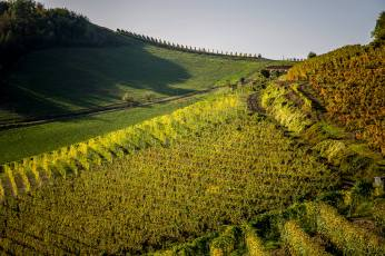 Ginestra cru vineyards