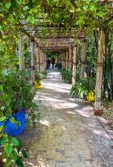 Jardin Majorelle path