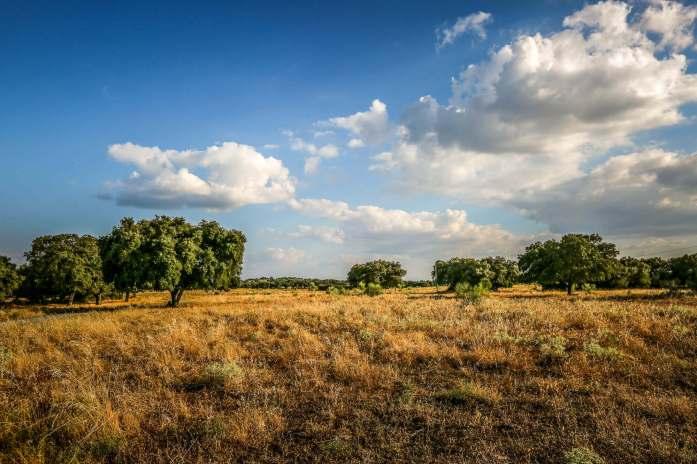 Sao Lourenco do Barrocal fields