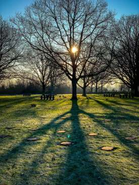 German Cemetery Normandy sun in trees