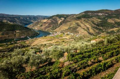 vines over Douro River