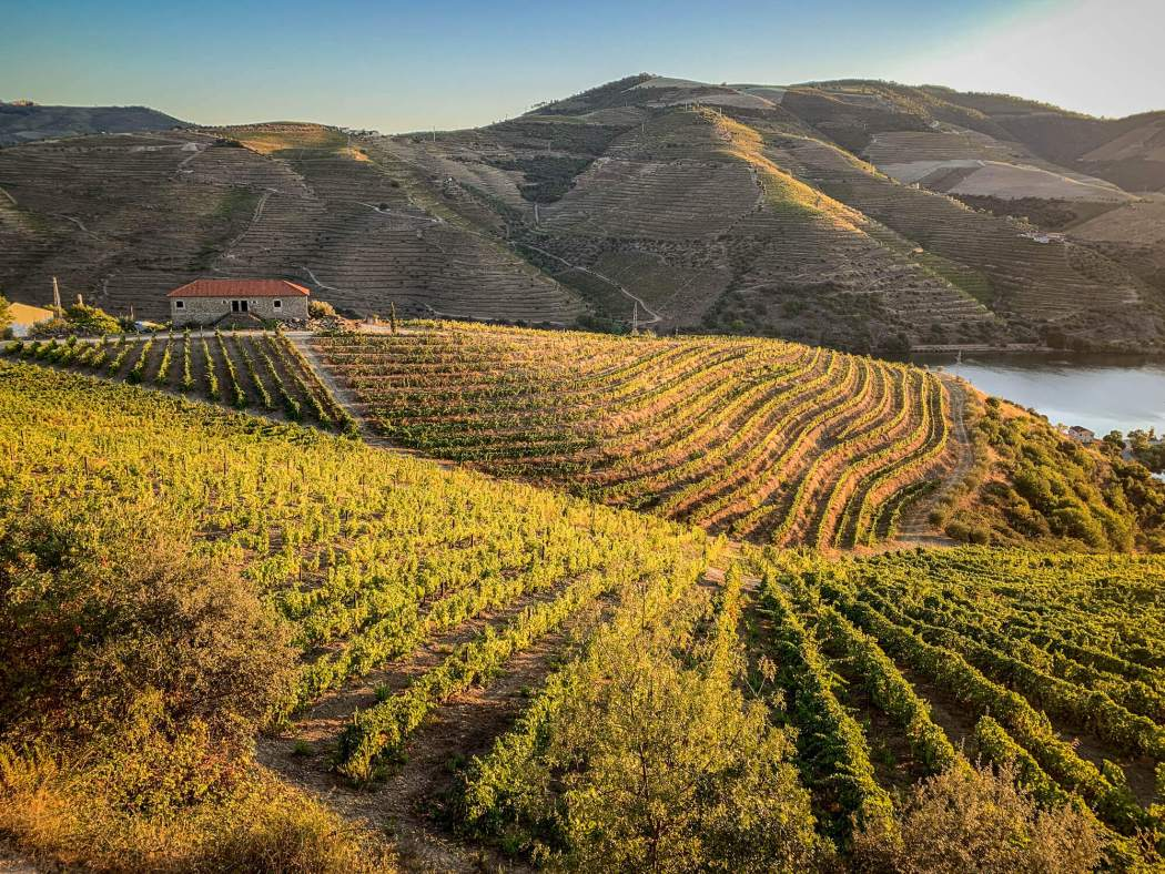 vines at sunrise Vila Gale Douro