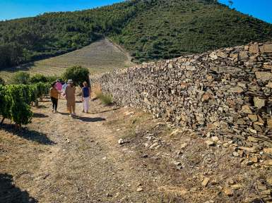 Quinta do Cume vineyard tour