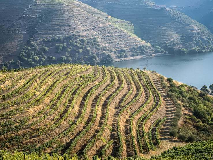 Vila Gale Douro vineyards