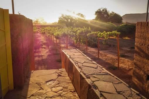 vineyard view Tierra Atacama
