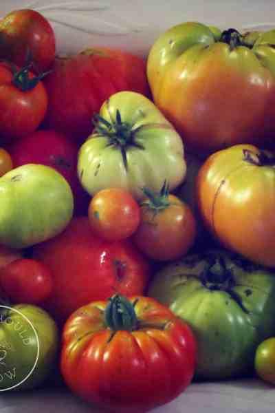 Home Grow Tomatoes
