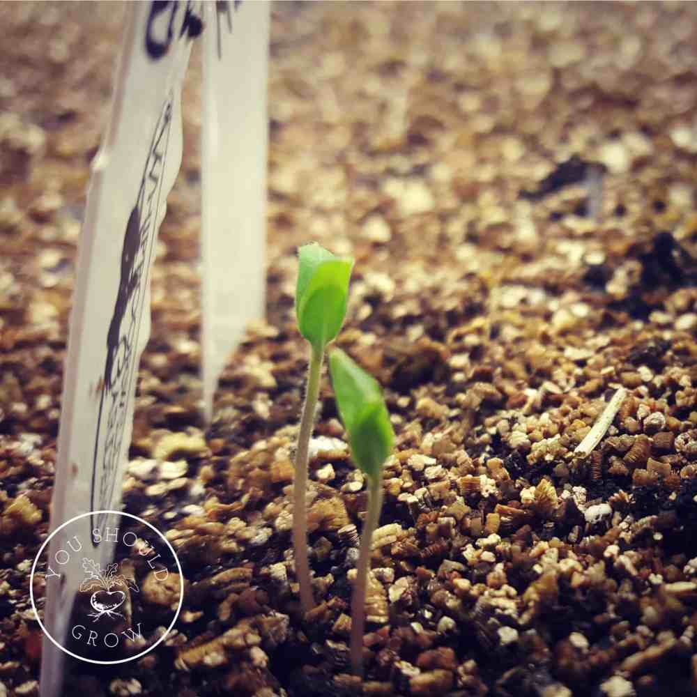 Seed Starting: Step By Step