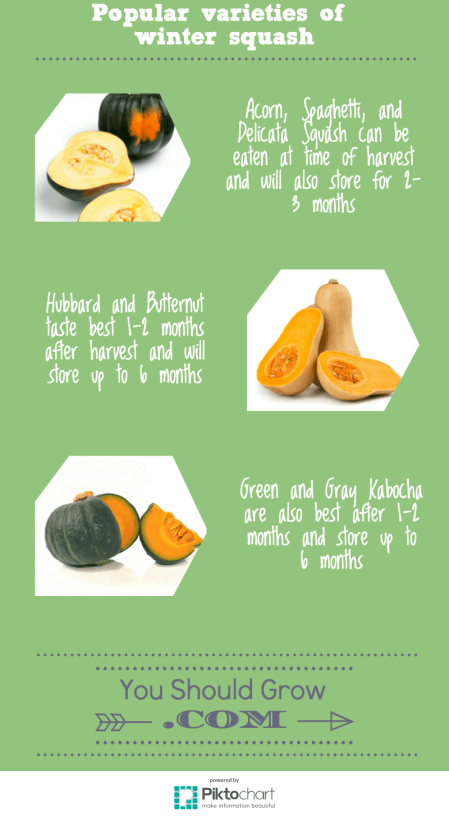 Types of winter squash infographic