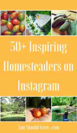 I've surrounded myself with like-minded growers and homesteaders on Instagram. As I scroll through my Instagram account, I am inspired by bountiful harvests, dreamy sunsets, recipes, farm animals, pets, bugs, and all the great things that happen when you live life out in nature. Follow these 50+ Inspiring Homesteaders on Instagram.