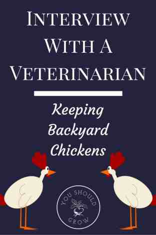 Even veterinarians have lots of questions about raising backyard chickens. Read about this doctor's experience as a first time chicken mom. Interview with a veterinarian: Keeping Backyard Chickens at YouShouldGrow.com