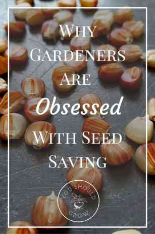 Read to understand why gardeners are obsessed with seed saving. Plus how to host a seed swap party with free checklist, invites, guidelines, and printables. At YouShouldGrow.com