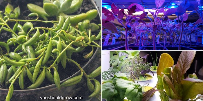 collage of succulent garden, plants growing under led lights, and plants growing in aerogarden