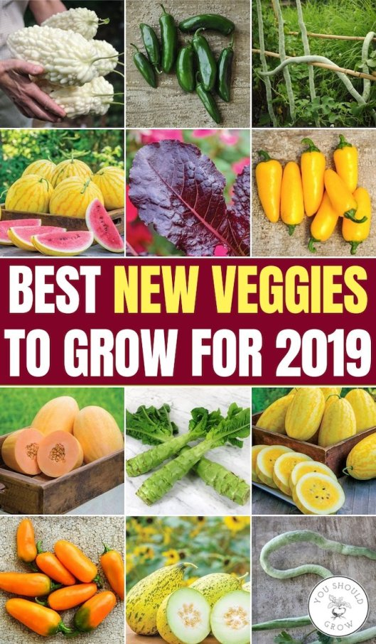 Best new veggies to grow for 2019 collage of new vegetables
