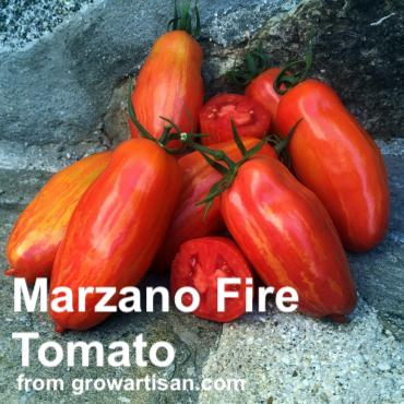 Cluster of marzano fire tomatoes on rock