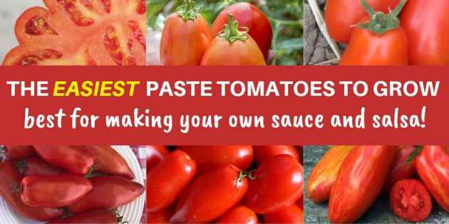 collage of red tomatoes. text: the easiest paste tomatoes to gro best for making your own sauce and salsa