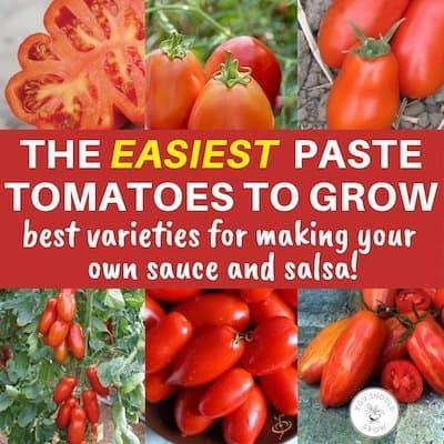 11 Best (BER Resistant) Tomatoes For Canning Sauces And Salsas