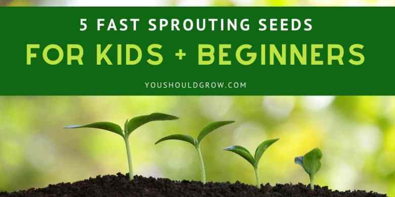 5 fast sprouting seeds for kids + beginners text overlay image of sprouts coming out of soil with blurry background