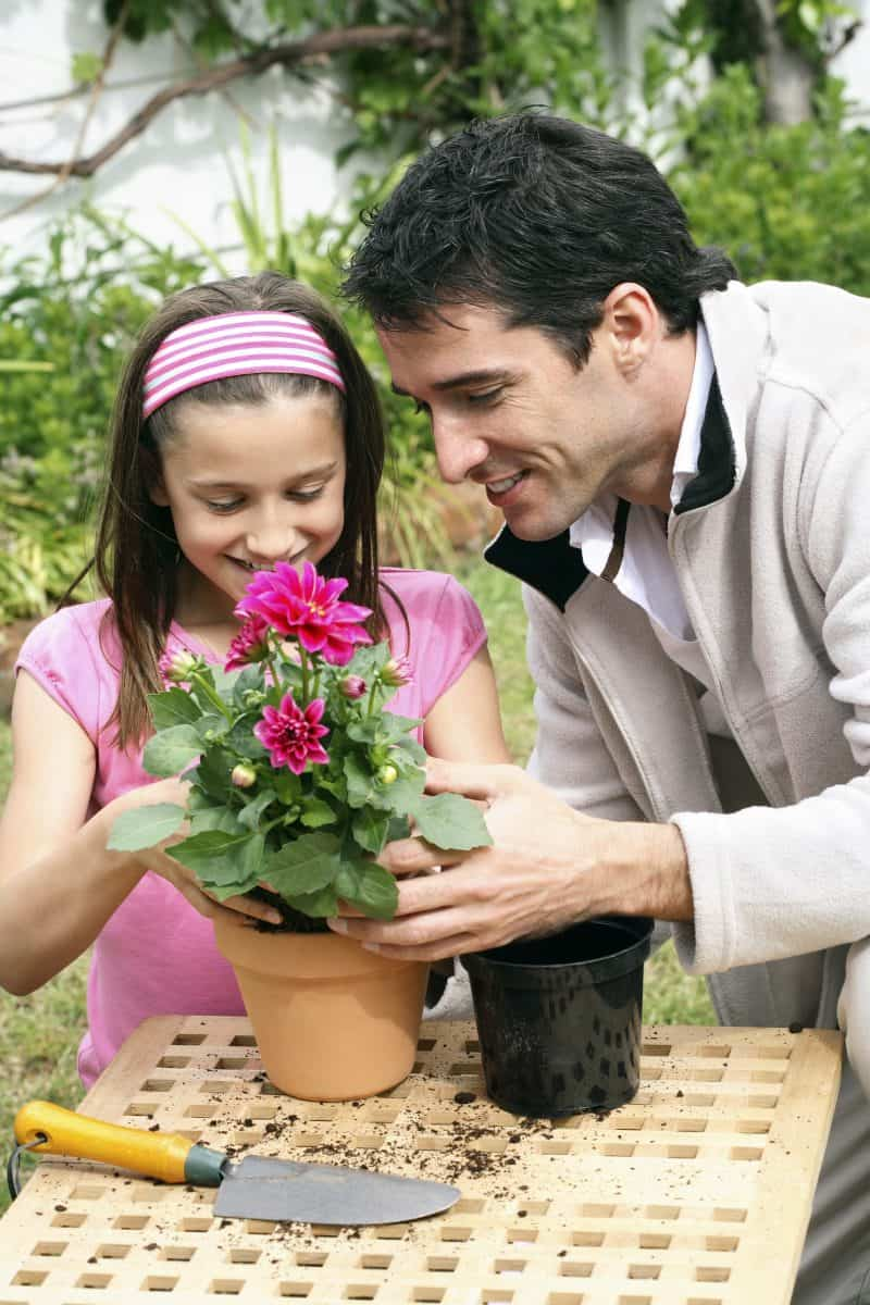 Dad teaching child how to plant flowers in a potted plant.