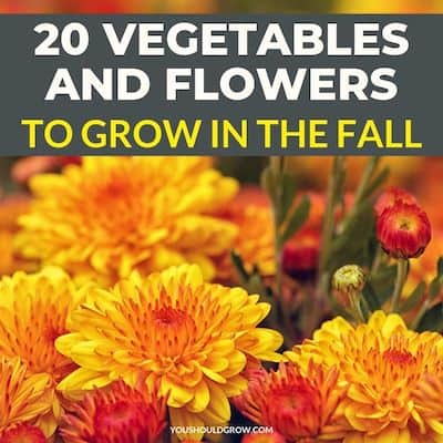20 vegetables and flowers to grow in the fall featured image