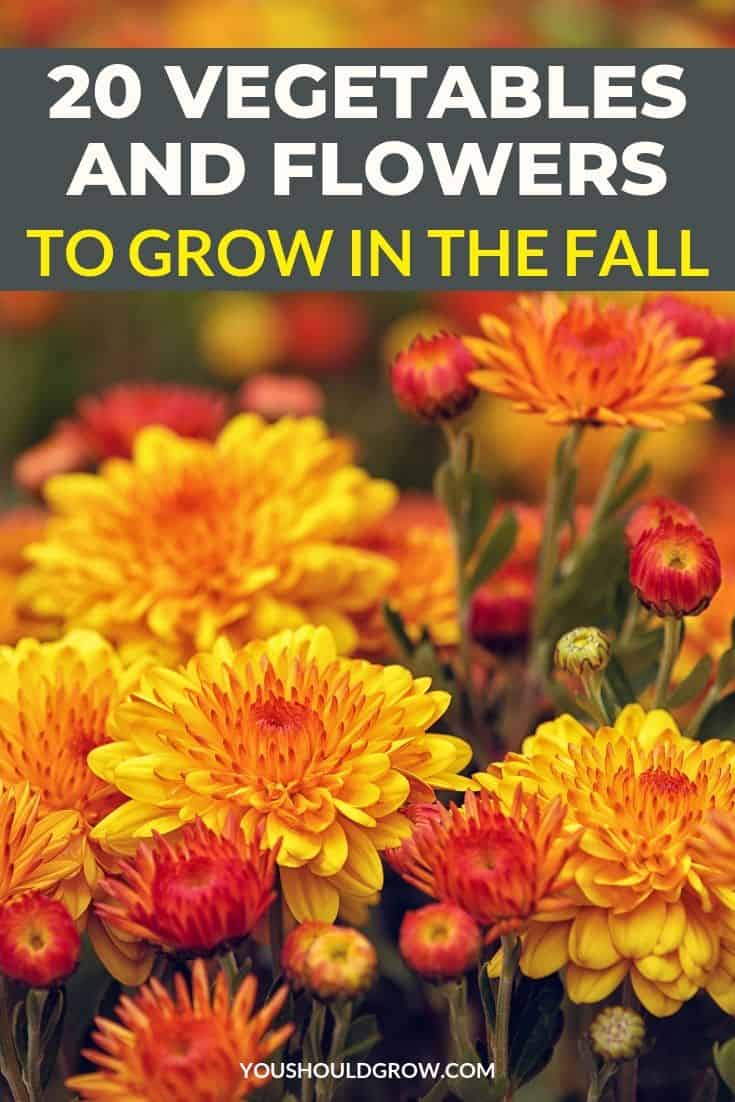 Wondering what plants are good to grow in your fall garden? Here are 20 vegetables and flowers you can grow in the fall.