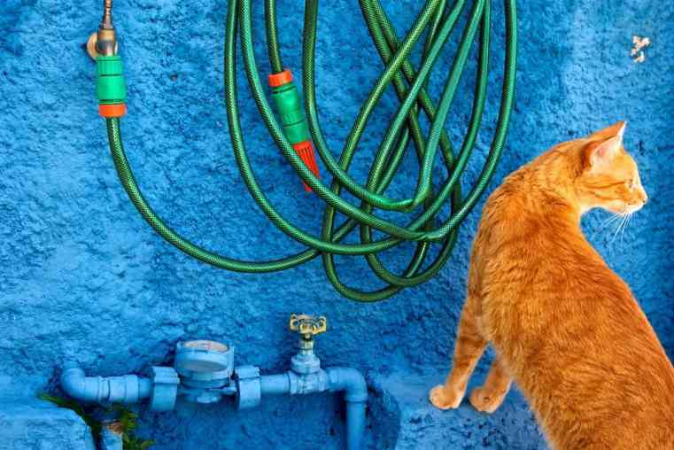 Water hose hanging on blue wall