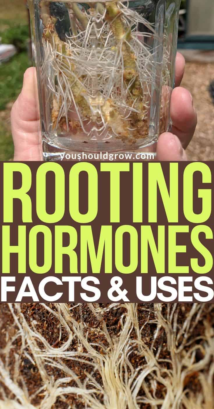 Gardeners know rooting hormone can help your plants get off to a great start. But what is it and when should you use it? Find out here.