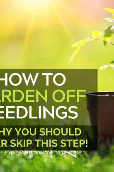 how to harden off seedlings + why you should never skip this step featured image