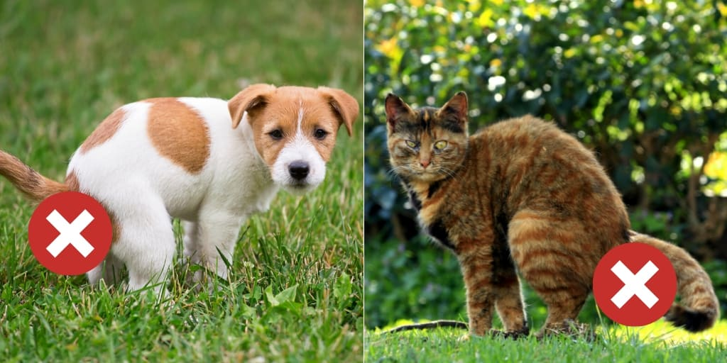 dog and cat feces are not appropriate for manure fertilizer