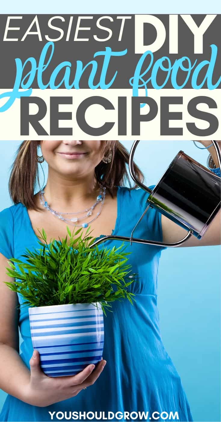 All natural homemade plant food is not only frugal, but can really boost your vegetable harvest. Find out how to use homemade fertilizers to grow healthier plants at home.