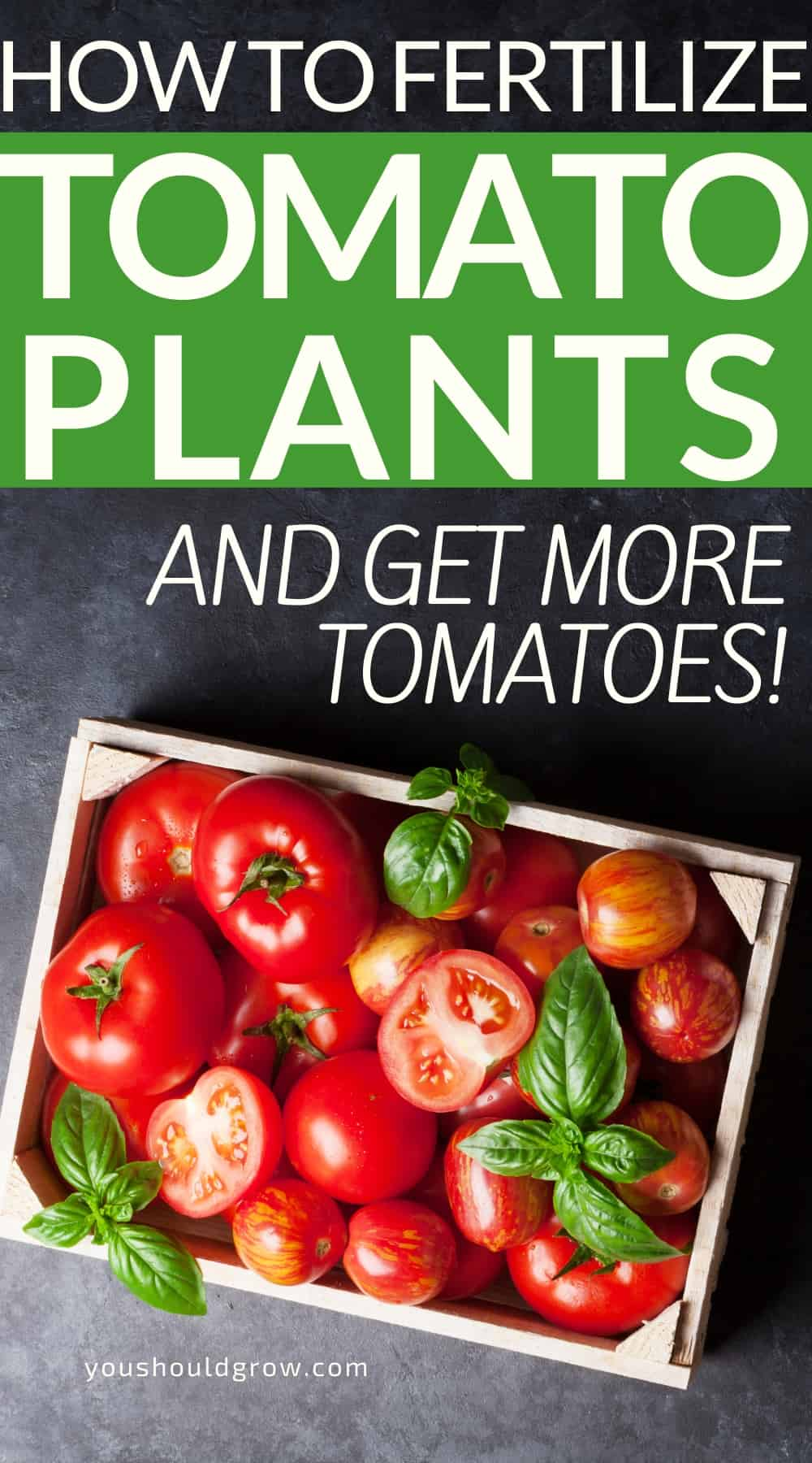 Growing tomatoes is not rewarding unless you get to eat some! Knowing how to fertilize tomatoes will make all the difference in how many tomatoes you get this summer. Homemade tomato fertilizer ideas and recipes. Want to know how to fertilize tomatoes? Get the tips and tricks you need to know here.  Beginner gardening, vegetable gardening tips