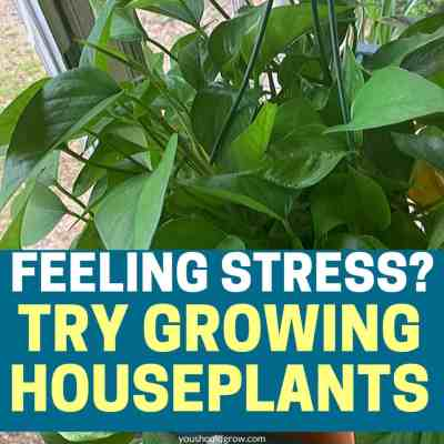Feeling stress? Try growing houseplants! Promotional image