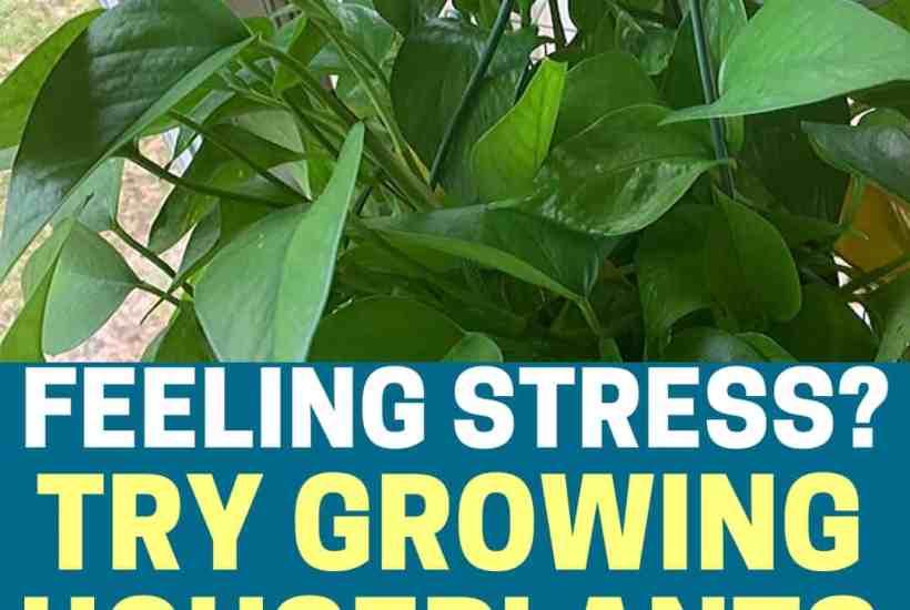 Feeling stress? Try growing houseplants! Promotional image