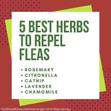 5 best herbs to repel fleas - green text in a white box with green and red background.
