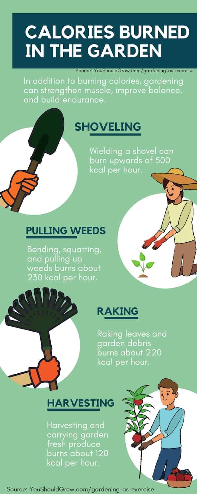 Gardening Tips: Calories burned when gardening as exercise.
