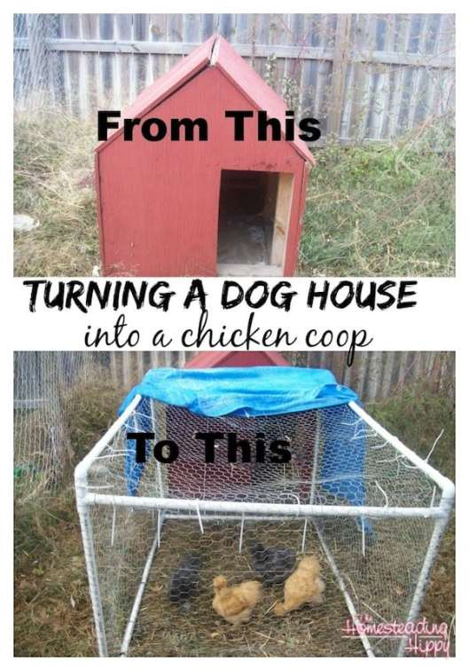 chicken coop from dog house