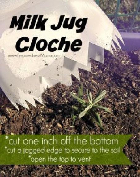 Milk Jug Cloche courtesy of Preparedness Mama