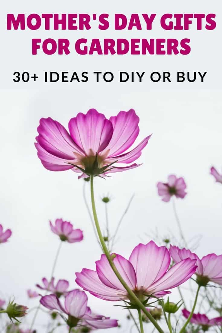 Mother's Day Gifts For Gardeners 30+ ideas to diy or buy text overlaying image of purple flowers and grey sky
