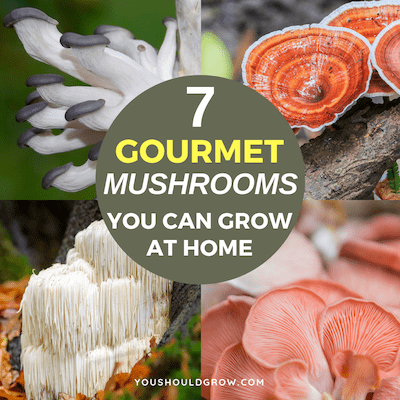 7 Gourmet Mushroom Growing Kits Anyone Can Grow