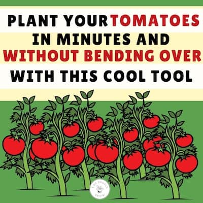 How To Plant 50 Tomatoes In 20 Minutes…Or Less!
