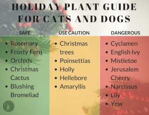 Safe and dangerous holiday houseplants guide